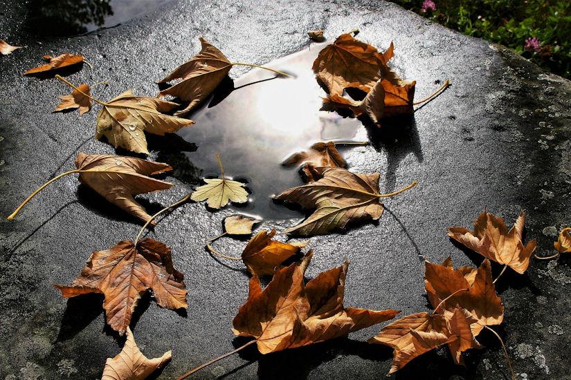 jesen kiša lišće